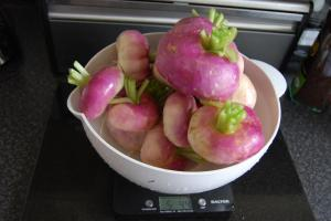 Harvest of Atlantic turnips