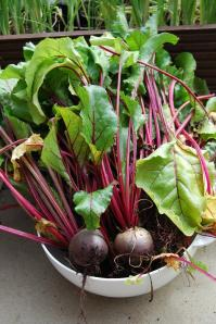 Move over beetroot...