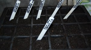 First seeds sown