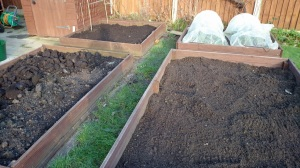 Freshly dug raised beds