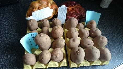 Charlotte and King Edward seed potatoes