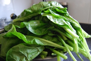 Perpetual Spinach Beet