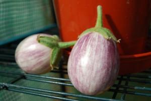 Pinstripe aubergines