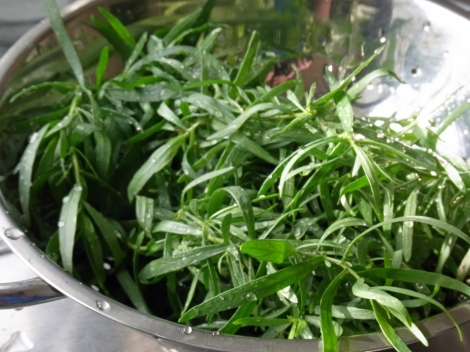 Freshly picked tarragon