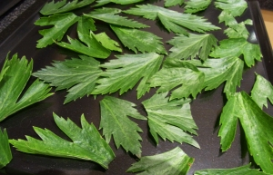 Celery leaves before drying