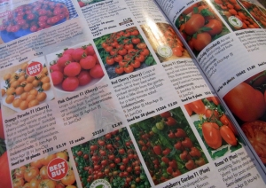 Browsing seed catalogues