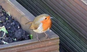 A cute little visitor