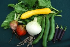 Vegetables picked for tonight's dinner