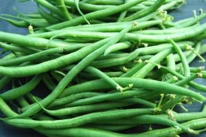 Castandel dwarf french beans