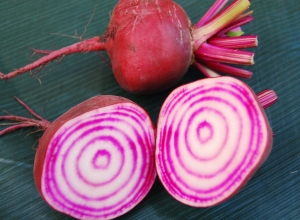 The famous stripes of Chioggia beetroot