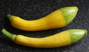 Zephyr courgettes with their characteristic green tips