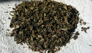 Oregano fully dried and ready for storing in a jar