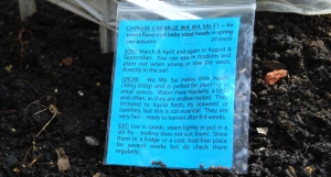 Chinese cabbage seeds went in the ground today