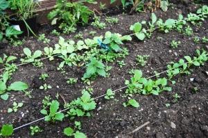 Weeding - before