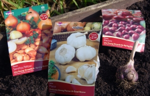 Onions and garlic, planting shortly