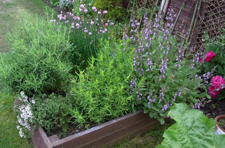Heavenly herbs in flower