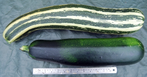 Colossal courgettes!