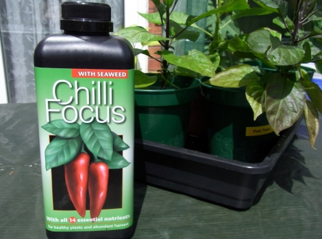 This should give the chillis a boost