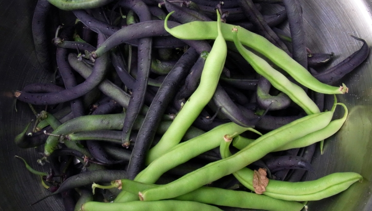 Purple Teepee and Tendercrop french beans