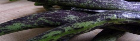 Bobis d'Albenga dwarf french beans