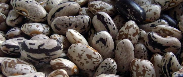 Bobis d'Albenga beans