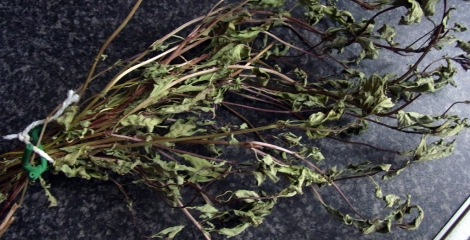 Dried Thai Basil, ready for stripping and storing