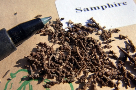 Marsh Samphire seeds ..