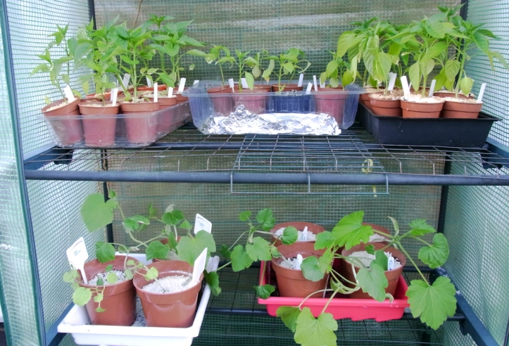 Chillis, peppers, courgettes, cucumbers and darkroom equipment