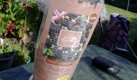 Good value blackberry plant from Aldi