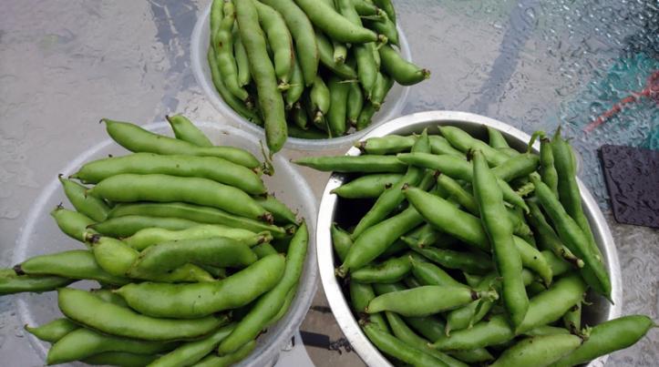 A broad bean bonanza