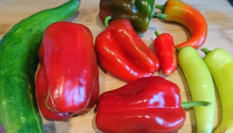 The mysterious but delicious red peppers of my dreams. Accompanied by just-picked cucumber and some other sweet peppers.