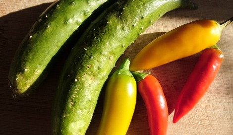 Mini cucumbers and chillis: Bulgarian Carrot and Rosso Guardia Cielo