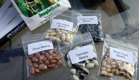 The makings of a bumper bean bonanza!