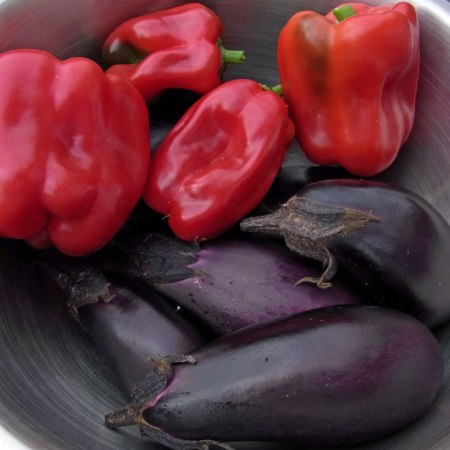 Late haul of 'ace' peppers and 'moneymaker' aubergines, both grown from grafted plug plants.