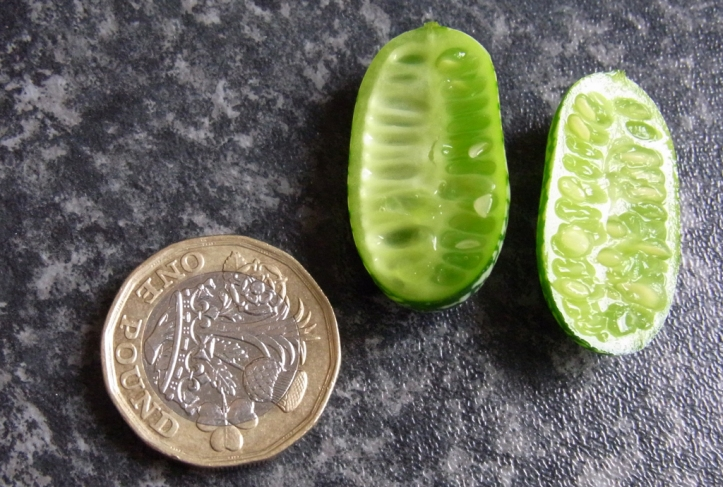 Cucamelons are quite small, but very refreshing