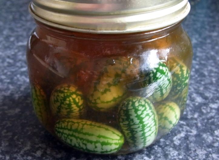 In a bit of a pickle